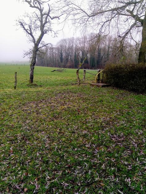 De mooiste plek op het nieuwe veld met uitzicht op de naastgelegen weide met mirabellenbomen en uiteraard koeien