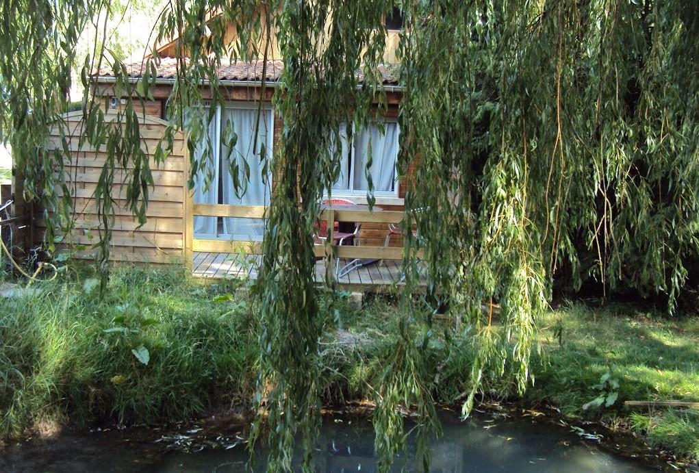 Vijver naast het zomerhuis met zilverwindes en overhangende wilgenboom